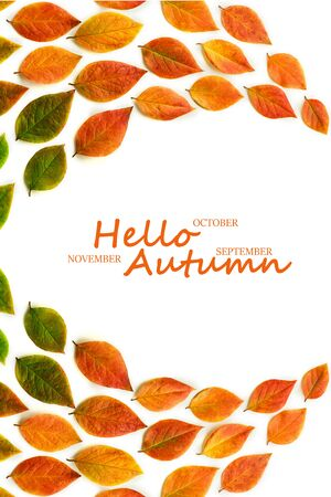 Multicolored dry autumn leaves on white background. Autumn concept. Top view, flat lay, copy space with text Hello Autumn, September, October, November.