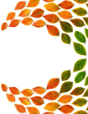 Multicolored dry autumn leaves on white background. Autumn concept. Top view, flat lay, copy space for text.
