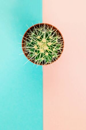Small green cactus in orange pot on pink and blue background. Copy space for text. View from above. Stock Photo