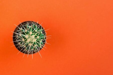 Small green cactus in orange pot on orange background. Copy space for text. View from above.
