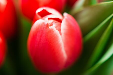 Spring theme. Mothers Day festive background. The bouquet of red tulips on brown background. Close up. Top view.