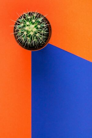 Small green cactus in orange pot on orange and purple background. View from above. Copy space for text.
