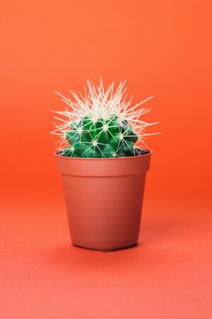 Small green cactus in orange pot on orange background. Copy space for text.