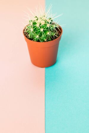 Small green cactus in orange pot on pink and blue background. Copy space for text.