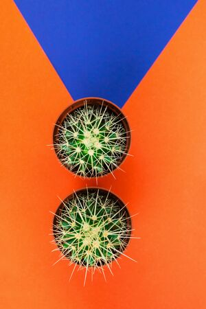 Two small green cactus in orange pot on orange and purple background. View from above. Copy space for text.