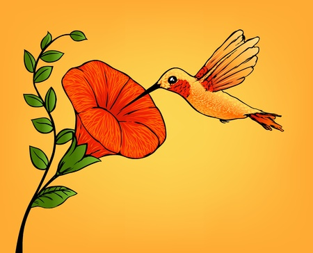 hummingbird and flower 向量圖像