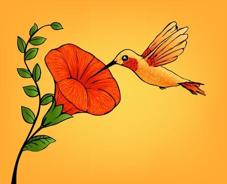tropical bird: hummingbird and flower Illustration