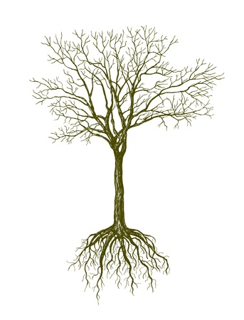 tree drawing: big leafless tree on white background