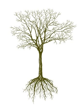 gran árbol sin hojas sobre fondo blanco