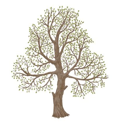 Illustratie van grote oude boom Stockfoto - 10439569