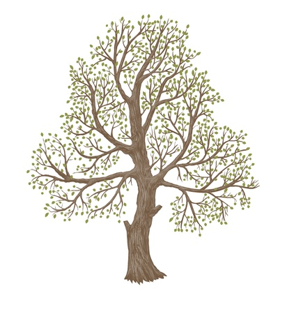 tree illustration: illustration of big old tree