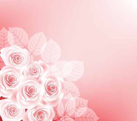 rose bush: background with roses