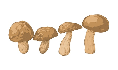 boletus: 4 mushrooms on white background
