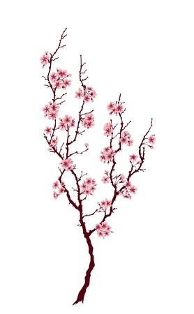 복숭아: 흰색 배경에 핑크 꽃과 봄 나무