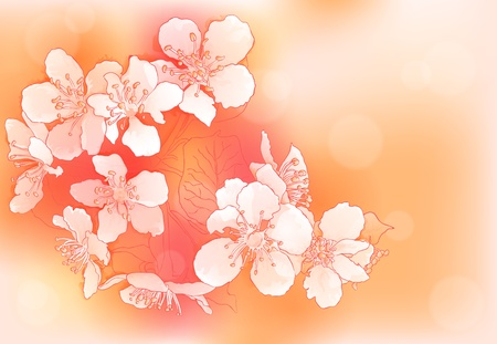 cherry branch: Spring background with cherry blossoms