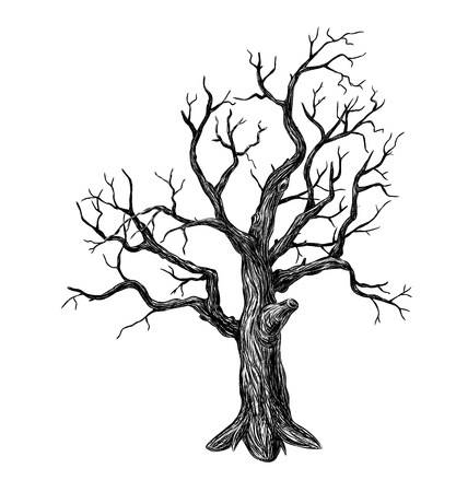 Hand drawn leafless tree on white background