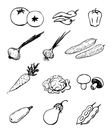 sketch illustration of different types of vegetables