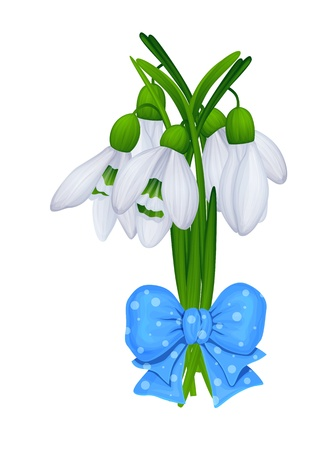 snowdrop: bouquet of snowdrop flowers with blue ribbon