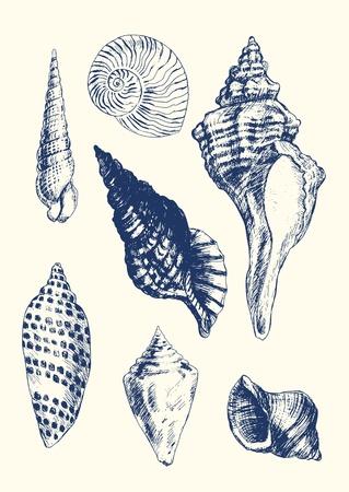 caracol: Colección de 7 a mano de conchas marinas