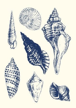 Collection of 7 hand- drawn seashells Stock Illustratie
