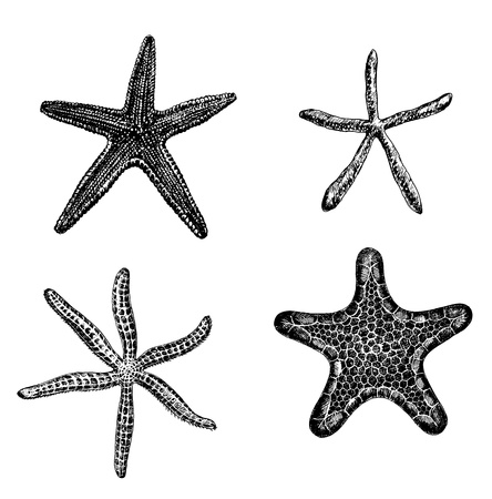 Set of 4 hand - drawn starfishes