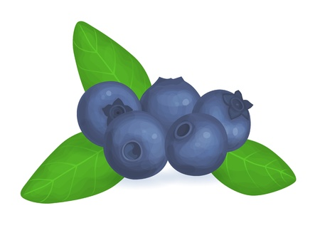 Illustration of fresh blueberries and leaves on white background