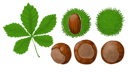 Chestnuts and leaf on white background Stock Illustratie