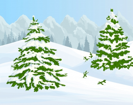 frozen trees: Winter background with fir trees