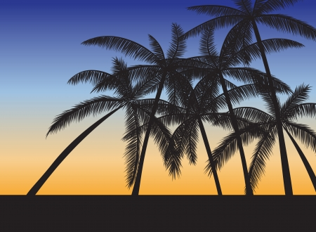 wind surfing: Tropical beach with palms at sunset