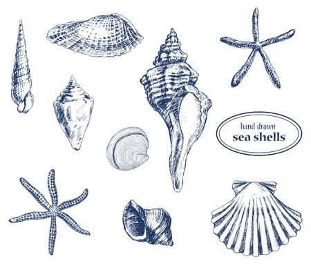 stella marina: Insieme di vari disegnati a mano conchiglie di mare