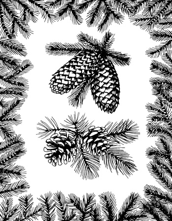 Hand drawn fir frame and two branches with pine cones Illustration