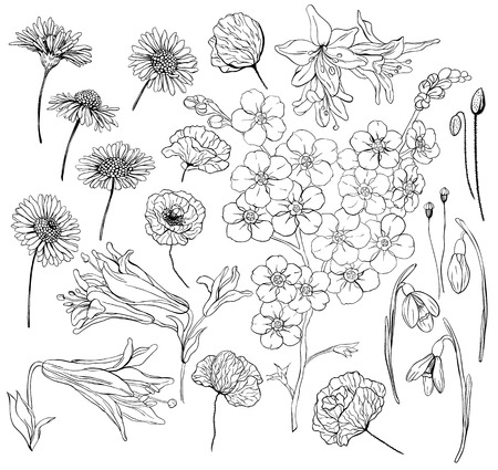 forget me not: Hand  drawn flowers. Collection of various hand drawn flowers - daisy, poppy, lily, snowdrop and forget me not.