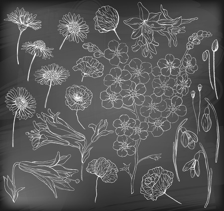 forget: Hand  drawn flowers. Collection of various hand drawn flowers - daisy, poppy, lily, snowdrop and forget me not on chalkboard background. Illustration