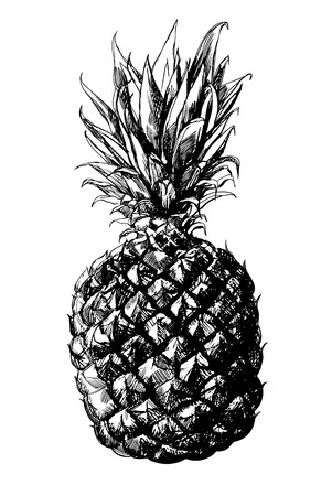 pineapple: Hand -  drawn pineapple on white background