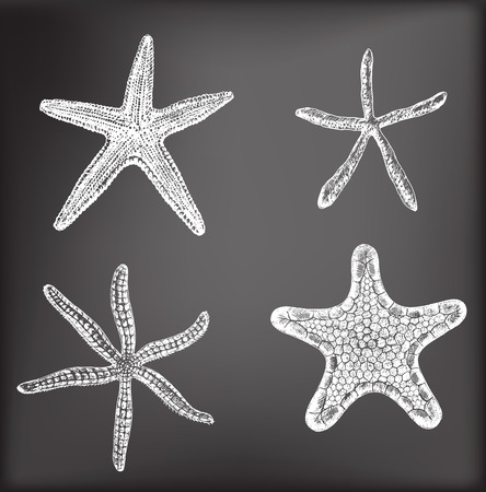 starfish: Set of 4 hand - drawn starfishes on chalkboard background.  Vector illustration contains gradient meshes.