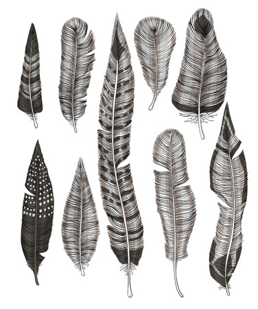 hand drawn: Collection of various hand drawn feathers on white  background.