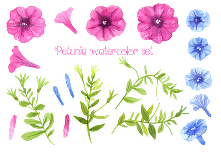 petunia: Collection of pink and blue petunia flowers and stems with leaves. Watercolor vector for design.