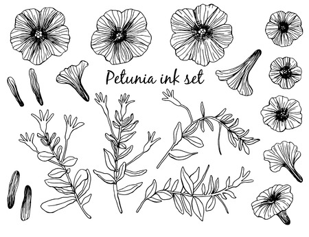 Collection of hand drawn petunia flowers and stems with leaves. Design elements on white background. Illustration
