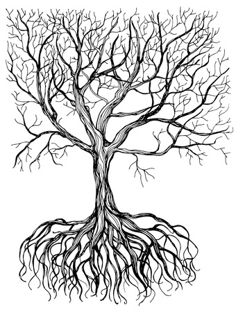 Hand - drawn tree with root on white background.