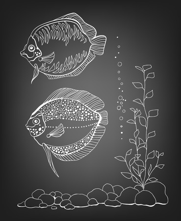pebbles: 2 Hand drawn fishes, pebbles and plant on chalkboard background. Illustration