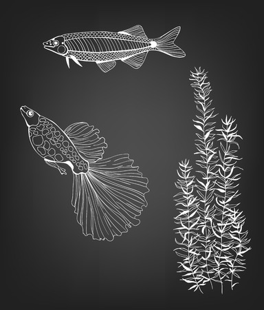 2 Hand drawn fishes and plant  on chalkboard background.