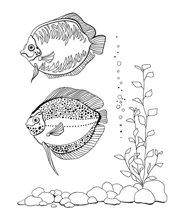 pebbles: 2 Hand drawn fishes, pebbles and plant on white background. Illustration