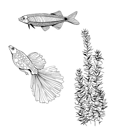 pond life: 2 Hand drawn fishes and plant  on white background. Illustration