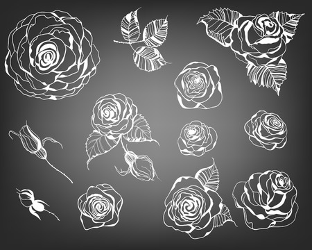 roses garden: Hand drawn set of roses, rose buds and leaves on chalkboard background. Illustration