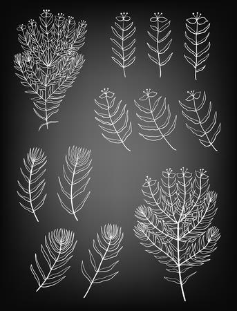 botany: Set of hand drawn decorative plants on chalkboard background. Elements for design.