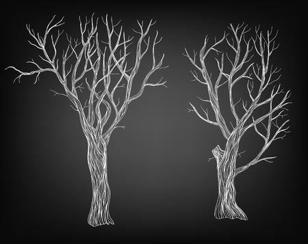 leafless: Two hand drawn bare trees on chalkboard background.