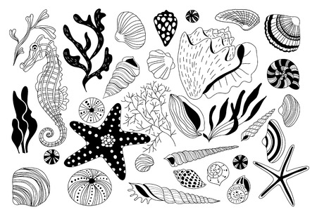 seaweeds: set of underwater creatures and seaweeds. Various shells and sea horse.