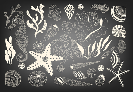 수중 생물과 해조류의 집합입니다. 각종 조개와 바다 말.