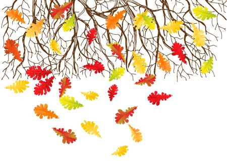 Mano - dibujado ramas de los árboles y la caída de las hojas de otoño en el fondo blanco.