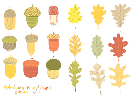 Hand drawn collection of acorns and oak leaves on white background.